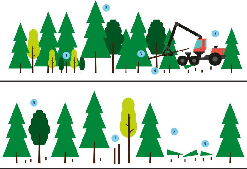 Illustration som visar stegen underväxt, urval, stamskador, rotrötebehandling, skördare, uttag, hänsyn och naturvård, stickvägar och ris för gallring.