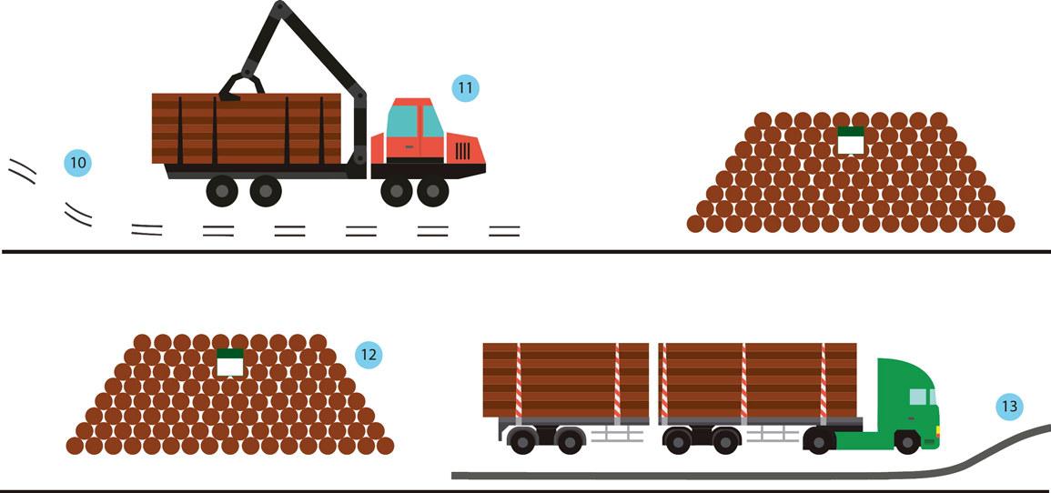 Illustration som visar stegen basväg, skotare, avlägg och skogsbilväg för gallring.