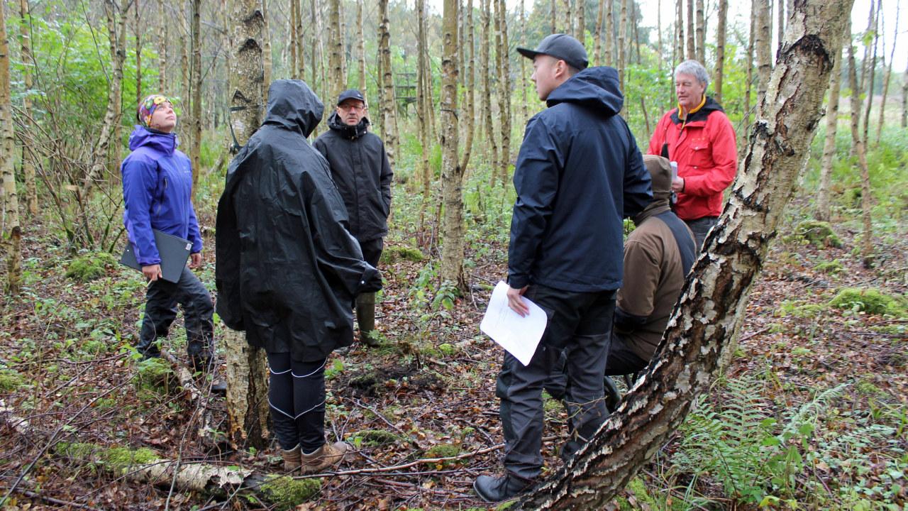 Sex personer står ute i ung björkskog iklädda jackor och regnkläder.