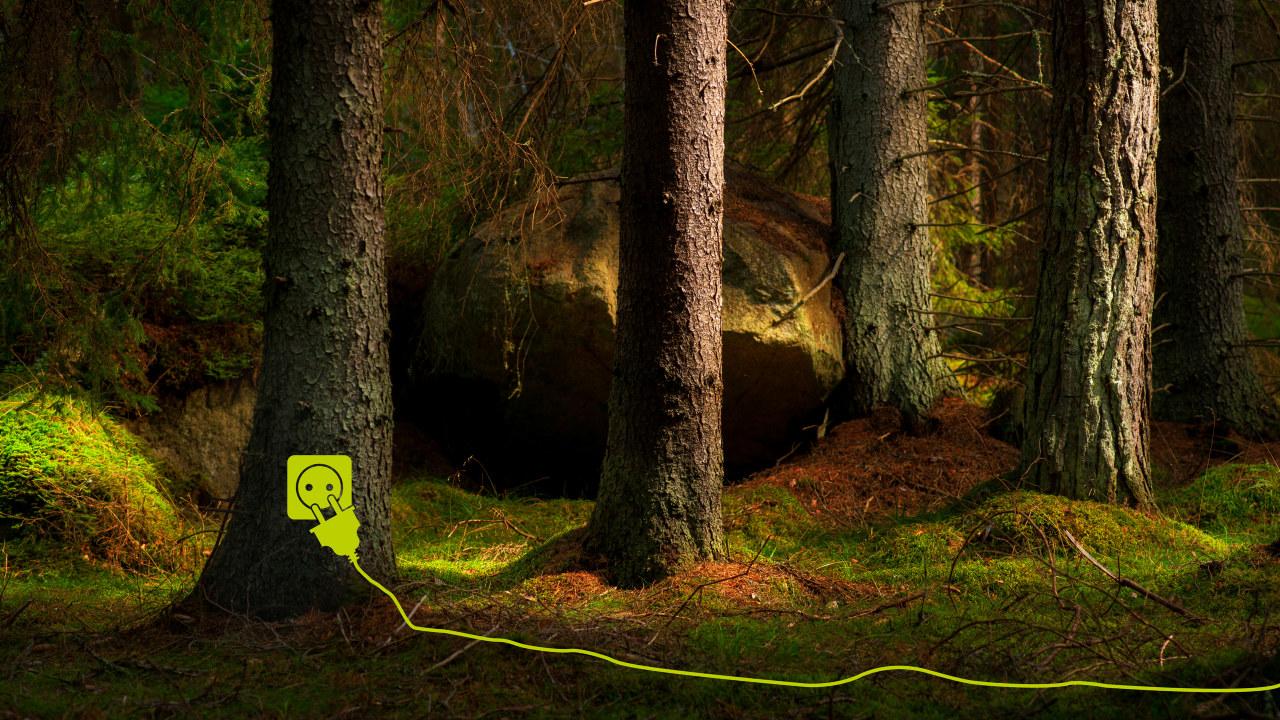 Bild som symboliserar Grön el från ett hållbart skogsbruk.