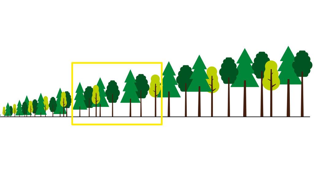 Illustration som visar rätt tillfälle att gallra skog